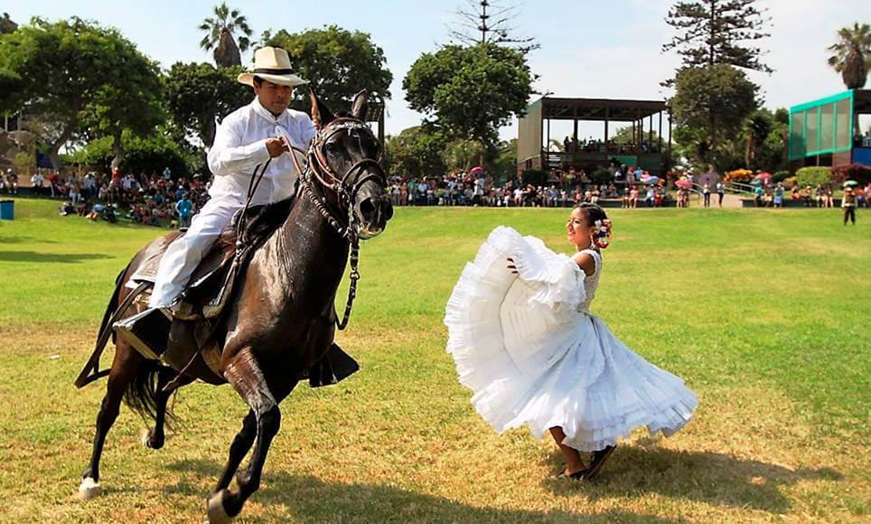 caballo de paso peruano - marinera